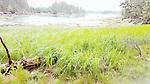 A Vinalhaven bay at low tide.
