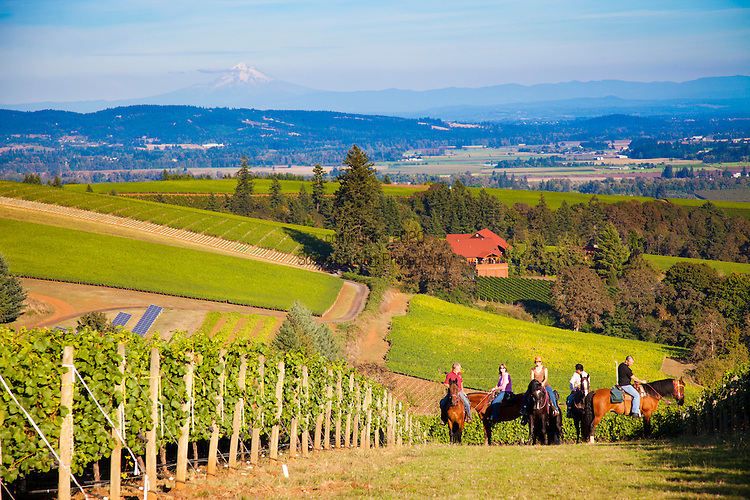Equestrian Wine Tours in Dundee, Oregon offer wine tours on well-trained gaited Tennessee Walking horses. A truly unique way to experience Oregon wine country, picnics are also available by special request.