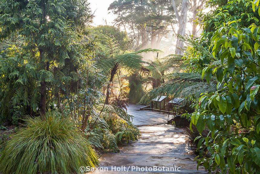Path in Ancient Plant Garden, San Francisco Botanical Garden