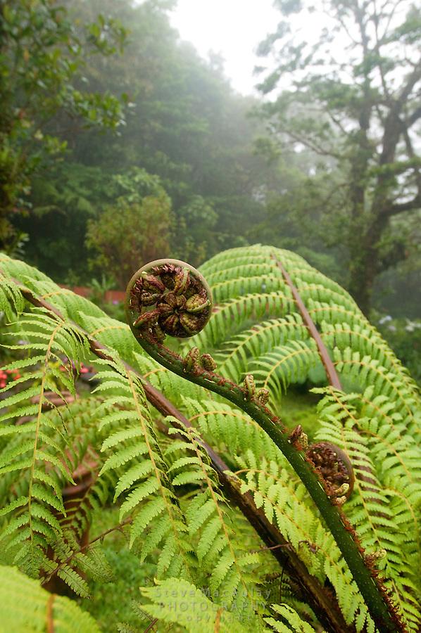 Lush cloud forest foliage, Monteverde, Costa Rica