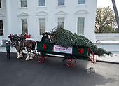 The 2018 White House Christmas Tree arrives as in previous years by horse and carriage on the North Portico prior to United States President Donald J. Trump and First lady Melania Trump coming out of the residence to accept it on the North Driveway of the White House in Washington, DC on Monday, November 19, 2018. The tree will be displayed in the Blue Room of the White House. <br /> Credit: Ron Sachs / CNP<br /> (RESTRICTION: NO New York or New Jersey Newspapers or newspapers within a 75 mile radius of New York City)