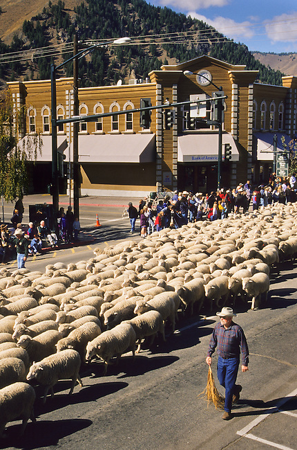 The annual Trailing of the Sheep Festival parade where thousands of sheep are walked through downtown Ketchum, Idaho each fall with many spectators that participate for a weekend of events
