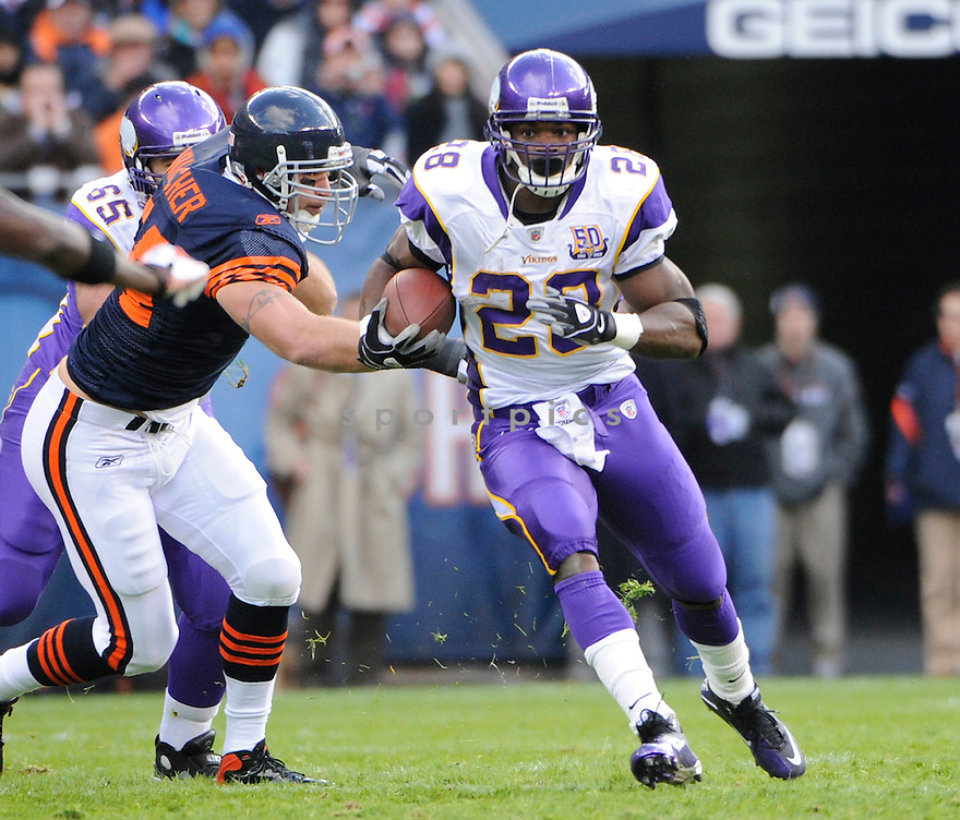 ADRIAN PETERSON, of the Minnesota Vikings, in action  during the Vikings game against the Chicago Bears on November 14, 2010 at Soldier Field in Chicago, IL...Bears won 27-13..