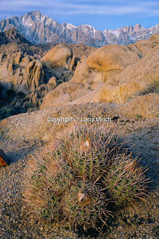 Mojave mound cactus<br />