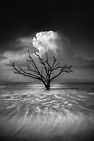 Located on the east coast of South Carolina, the beach of Edisto Island is scattered with driftwood and skeleton trees. Coastal erosion has killed these trees, but some still stand upright, rooted firm in the soil. While this area has been widely photographed before, I traveled here in the summer of 2015 with the intention of creating something unique. I wanted to make a photograph that captured the subtle beauty and raw emotion one feels when looking at these old trees which, although dead, are alive in their own right and seemingly transcend time. I spent several days here, each morning going out to the beach in different conditions. This one particular morning, the weather didn't seem very dramatic, and most of my hopes were dashed. But as the sun began to rise above the horizon, the light illuminated a lone cloud which framed this one tree perfectly... a nice silhouette with the light reflecting off the water below. I knew I would only have seconds to capture this moment, and after finding the perfect shutter speed I knew I had it. The dramatic light and an incoming tide had produced a brief but unforgettable moment at sunrise this summer morning.