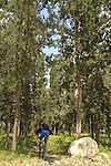 Israel, Lower Galilee, Bike Trail at Zippori (Kiryat Ata) Forest