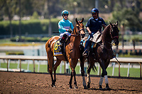 ARCADIA, CA - MAY 27: Lady Eli and Irad Ortiz before the Gamely at  Santa Anita Park  on May 27, 2017 in Arcadia, California. (Photo by Alex Evers/Eclipse Sportswire/Getty Images)