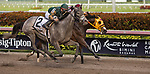 HALLANDALE BEACH, FL - JANUARY 27: Jordan's Henny #2, with Tyler Gaffalione riding, wins the Hurricane Bertie Stakes on Pegasus World Cup Invitational Day at Gulfstream Park Race Track on January 27, 2018 in Hallandale Beach, Florida. (Photo by Liz Lamont/Eclipse Sportswire/Getty Images)