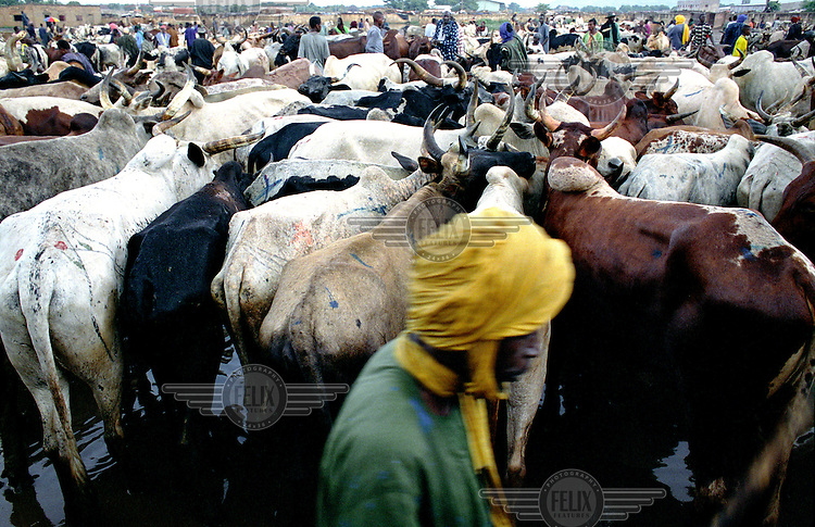 ©Crispin Hughes/Panos Pictures..MALI Bamako 2003..Cattle market ..