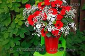 Carl, FLOWERS, photos, SWLA12030,#f# Blumen, Natur, flores, naturaleza