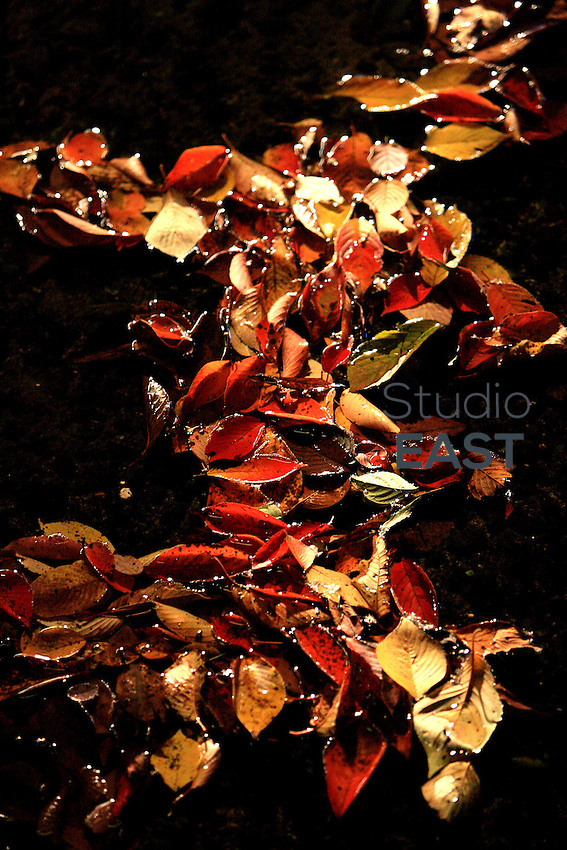 Fallen leaves float on water at night in Kyoto, Japan, on November 7, 2006. Kyoto is the former imperial capital of Japan, and today houses more than 1.5 million. Photo by Lucas Schifres/Pictobank