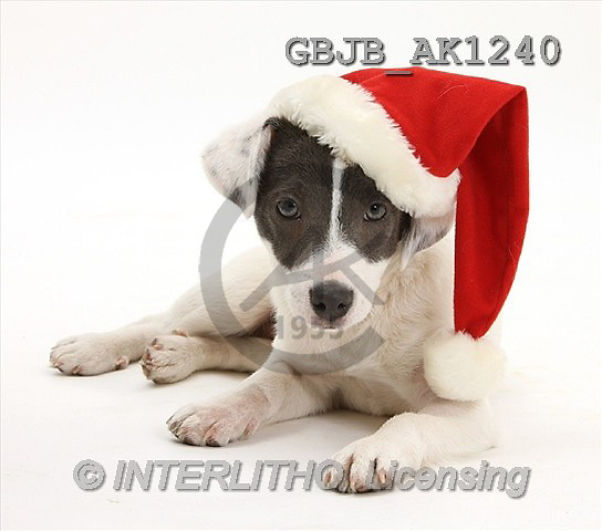Kim, CHRISTMAS ANIMALS, photos(GBJBAK1240,#XA#) stickers