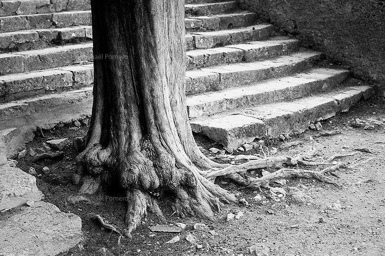 Moustiers Sainte Marie (France) septembre 2012<br /> <br /> Arbre devant la chapelle Notre-Dame de Beauvoir.<br /> <br /> Tree in front of the chapel Notre-Dame de Beauvoir.