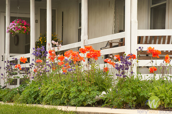Franklin County, Pa. Farmhouse porch and Poppies and delphinium.