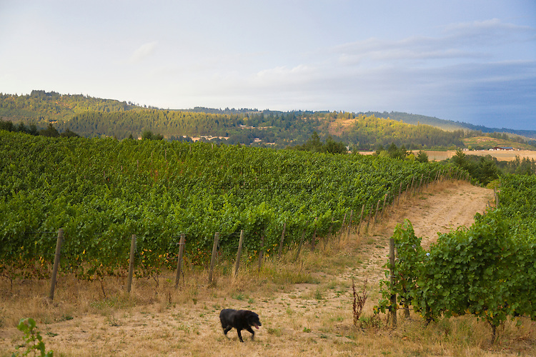 Brick House Vineyard and winery near Newberg, Oregon produces a variety of organic wines.