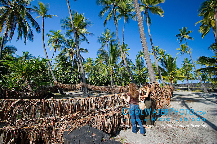 Woman visitors observing ropes with Ti leaves wich was used by ancient Hawaiians for traditional Hukilau fishing method, Coconut Palms, Cocos nucifera, Pu`uhonua o Honaunau or Place of Refuge National Historical Park, Honaunau, Big Island, Hawaii