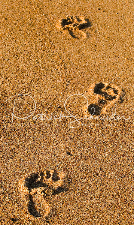 Barefoot impressions along the beach in Amelia Island, FL