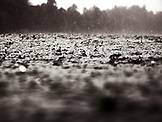 INDONESIA, Mentawai Islands, Kandui Resort, rain drops falling into the Indian Ocean (B&W)