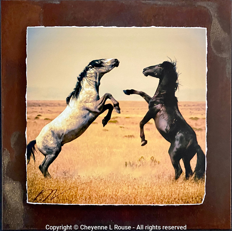 """Desert Duel - Mixed Media - Utah<br /> <br /> Each unique piece is made to order. If I have the piece in stock I can ship it in 2-3 days. If I don't have it in stock and it has to be made, it will ship in 1-2 weeks. Feel free to contact me at chey.rouse@gmail.com before you order if you need the piece ASAP. <br /> <br /> The photograph is printed on a Silk photo paper, the edges of the photo are torn, photo is mounted to foam board, then I mount it to an 8""""x8"""" piece of rusted metal. The rust is unique on each piece...no two pieces are alike. PLEASE keep in mind that the rust on the piece(s) you receive may be slightly different than the photo. Each piece of metal is sealed after it is done """"rusting"""" and is titled, hand signed and, ready to hang. To see the detail for theses Mixed Media pieces please click on the 1st photo in this gallery. You will be able to see the detail of the torn paper edge as well as the back of the piece."""