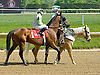 Tech Fall before The Joseph French Memorial Stakes at Delaware Park on 5/19/12