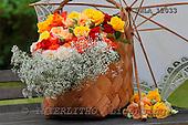 Carl, FLOWERS, photos, SWLA12033,#f# Blumen, Natur, flores, naturaleza