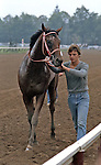 Timely Writer (by Staff Writer) after winning the Hopeful Stakes, Saratoga Race Course.