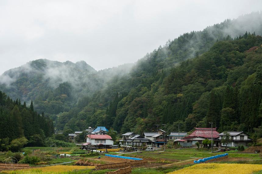 Rice harvest on a misty autumn day in the mountains near Nobushina, Nagano, Japan.