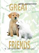 Alfredo, ANIMALS, dogs, photos+++++,BRTOXX02453CP,#a# Hunde, perros