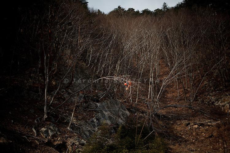Ameyoshi, February 24 2012 - Buoies in a tree.