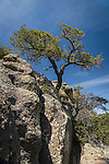 Tree growing between the rocks in Chiricahua National Monument