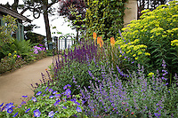 Flowering perennial garden with Salvia, Euphorbia, Nepeta by earthen path leading to gate and ocean view in Northern California coastal garden; design by Gary Ratway