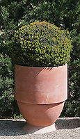 A simple terracotta pot designed along simple contemporary lines by Paul Gervais is one of the features in the garden