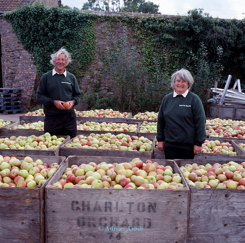 June and Robin Small who run  Charlton Orchards, Taunton, Somerset. Their company was chewed up and spat out by the superstores, but they didn't give up. They found a way of surviving, by selling direct to local people. They've become evangelists for community orchards and local marketing.