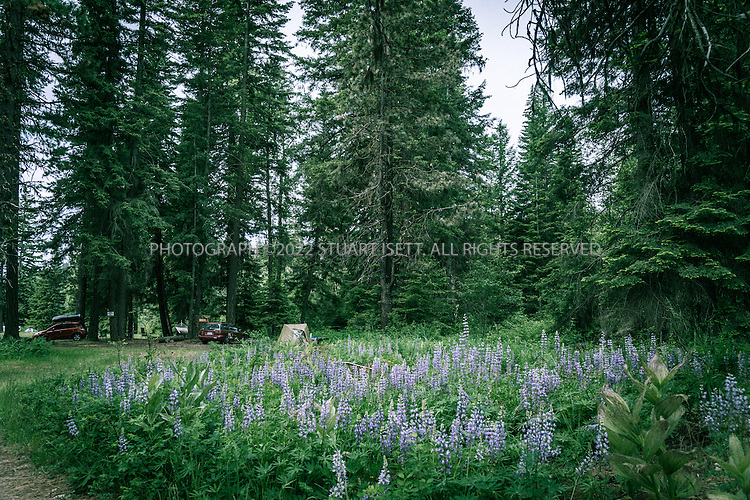 5/31/2015&mdash;Cle Elum, Washington, USA<br /> <br /> <br /> The Twentynine Pines Campground, on Teanaway Road North Fork in Cle Elum, Washington. <br /> <br /> A Kittitas County sheriff&rsquo;s deputy, called to the camp following reports of unattended children there, described a feeling that there was &ldquo;some kind of cult activity&rdquo; going on at Melford Warren Jr.&rsquo;s&nbsp;campsite, which was near the North Fork Teanaway River which runs next to the camp. Now, investigators claim Warren, 43, was nearby when deputies arrived on Sept. 15, raping one of his 12&nbsp;children.<br /> <br /> Melford Warren Jr., 43, lived with his two lovers, Shannon Felicia Ann Smith, 41, and Amanjot Kaur Jaswal, 28 in Port Orchard, Washington. Warren has been charged with child rape and related crimes on allegations stemming from his family&rsquo;s stay at this Port Orchard home.<br /> <br /> Photograph by Stuart Isett<br /> &copy;2015 Stuart Isett. All rights reserved.
