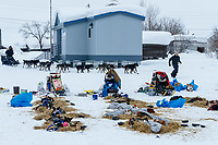 Volunteer Brandon Skeel leads Richie Beattie's team to a parking spot at the Kaltag checkpoint on Sunday afternoon March 10th during the 2019 Iditarod Trail Sled Dog Race.<br /> <br /> Photo by Jeff Schultz/  (C) 2019  ALL RIGHTS RESERVED