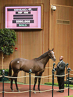 September 10, 2014: Hip #498 Unbridled's Song - Bubbler colt consigned by Clearsky Farms, sold for $560,000 at the Keeneland September Yearling Sale.   Candice Chavez/ESW/CSM