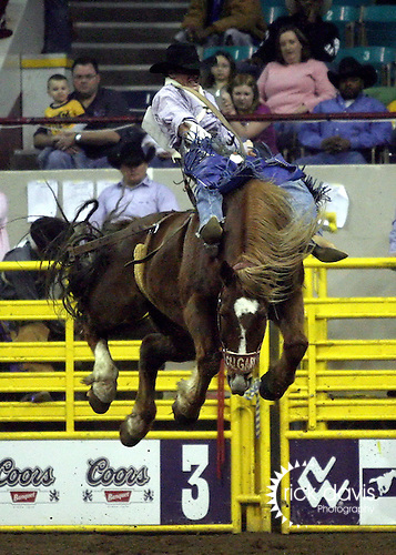 1/19/09--Photo by Rick Davis--PRCA cowboy Chase Erickson of Alma, Idaho scores an 81 point bareback bronc ride on the Calgary bronc Multichem Loganberry during action at the 103rd National Western Stock Show and Rodeo in Denver, Colorado.