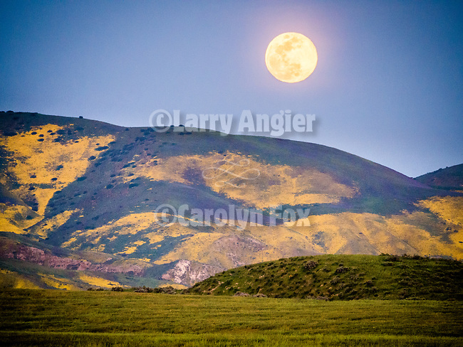 Moonrise over the wildflower-covered Temblor Range in spring, Carrizo Plain, San Luis Obispo County, Calif.