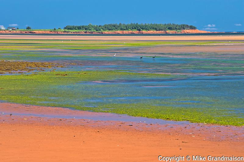 Sandy shoreline along the Northumberland Strait<br />Annandale<br />Prince Edward Island<br />Canada