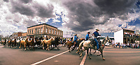 Hundreds of horse stampede through Three Forks, Montana, during the annual Montana Horses Roundup & Drive.