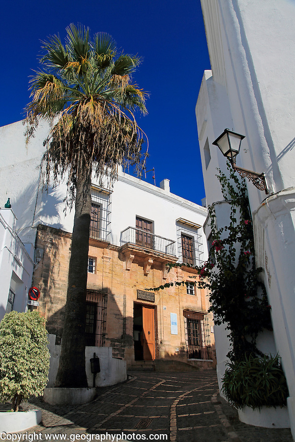 Palm trees and white buildings, Vejer de la Frontera, Cadiz Province, Spain