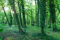 France, Indre-et-Loire (37), Chenonceaux, château et jardins de Chenonceau, le sous-bois