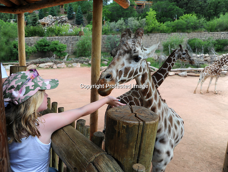 Young Girl Feeding a Giraffe at Cheyenne Mountain Zoo, Colorado, USA