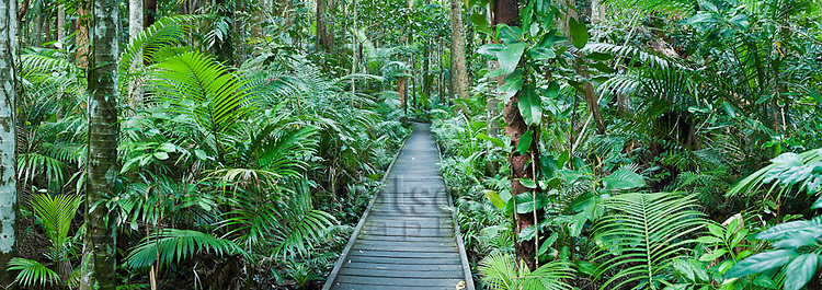 Rainforest boardwalk at Botanical Gardens.  Cairns, Queensland, Australia