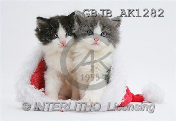 Kim, CHRISTMAS ANIMALS, photos(GBJBAK1282,#XA#) stickers