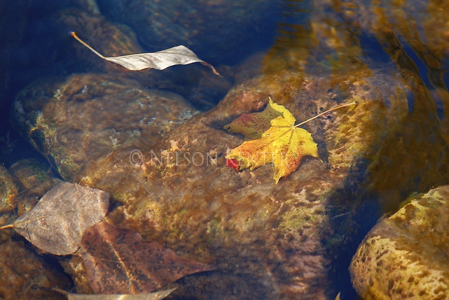 Autumn leaves floating down the stream