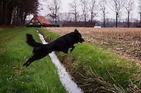 Nederland, Winterswijk, 17 april  2006. .Hond springt over sloot tussen weiland en weggetje...Foto (c) Michiel Wijnbergh
