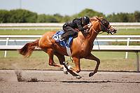 #131Fasig-Tipton Florida Sale,Under Tack Show. Palm Meadows Florida 03-23-2012 Arron Haggart/Eclipse Sportswire.