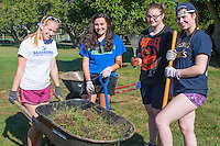 Olivia Alcott,'20, Alexandra Harkness,'20, Abby Wasylean,'20, and Meghan McMahon,'20,  volunteer at the Methodist Community Gardens in Middletown while taking part in the Salve Regina Service Plunge.