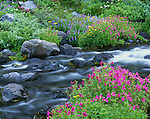 Mount Rainier National Park, WA<br /> Pink monkey flower, lupine groundsel, and valerian blooming along the waters of the Paradise River